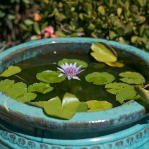 Lushgrow_waterplants